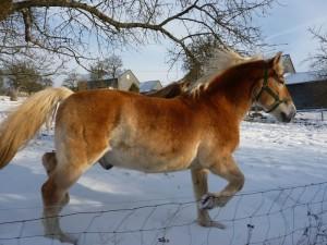 Amigo im Schnee klein