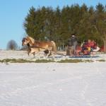 Pferdeschlitten auf verschneitem Feldweg