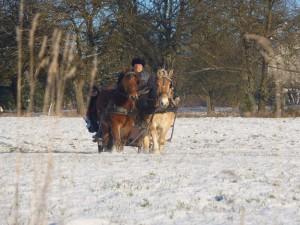 Zweispänner im Schnee