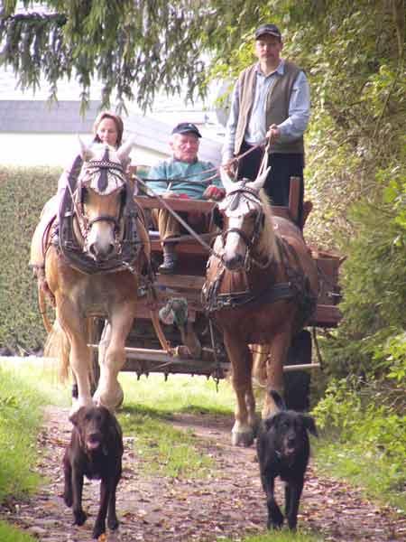 Hunde eskortieren den Ackerwagen