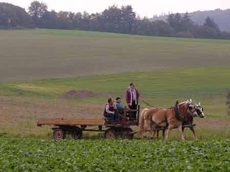 Ackerwagen Gespann im Hunsrückpanorama