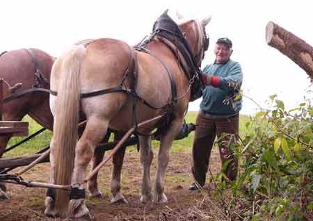 Opa als Pferde Halter