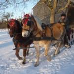 Zwei Pferde ziehen den Schlitten