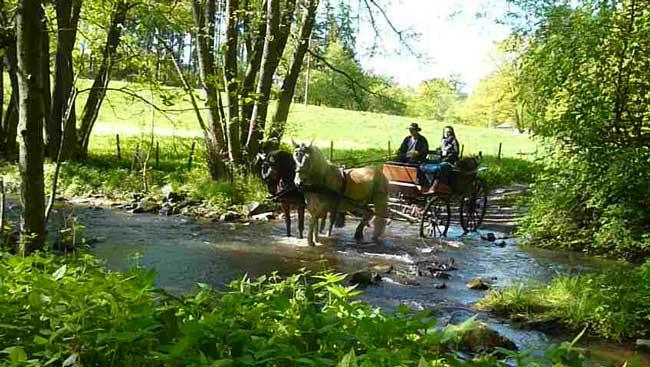 Pferde-im-Wasser
