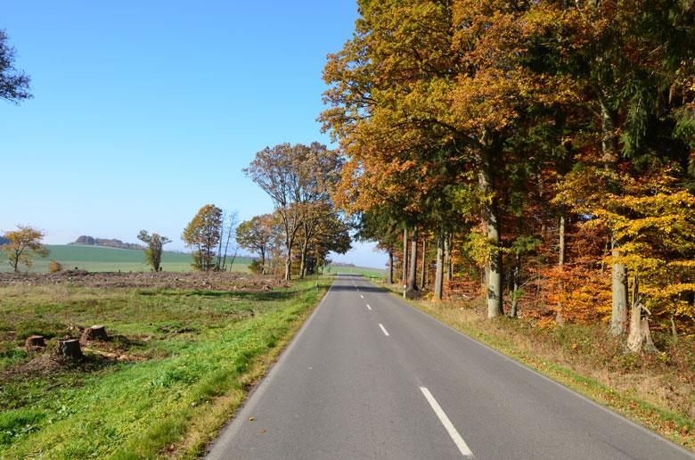 Straße mit bunten Laubbäumen am Rand