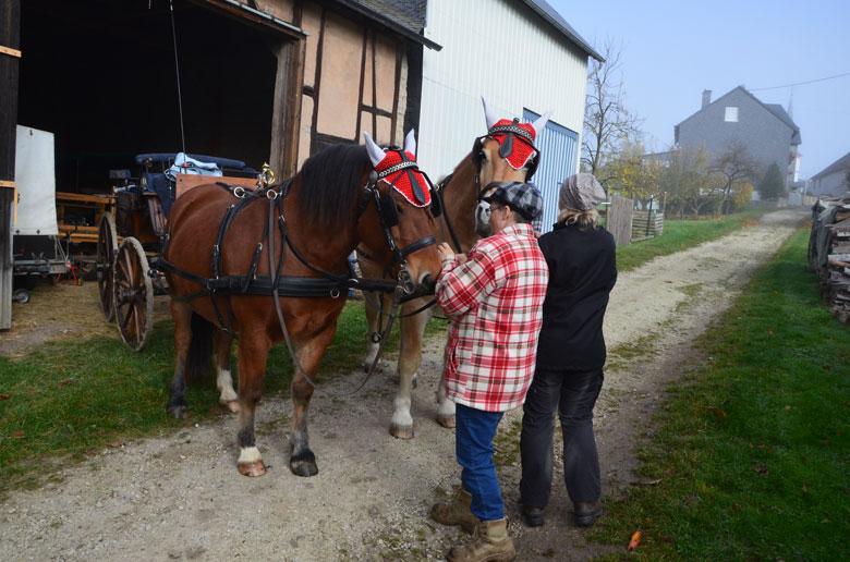 2 Pferde vor der Kutsche