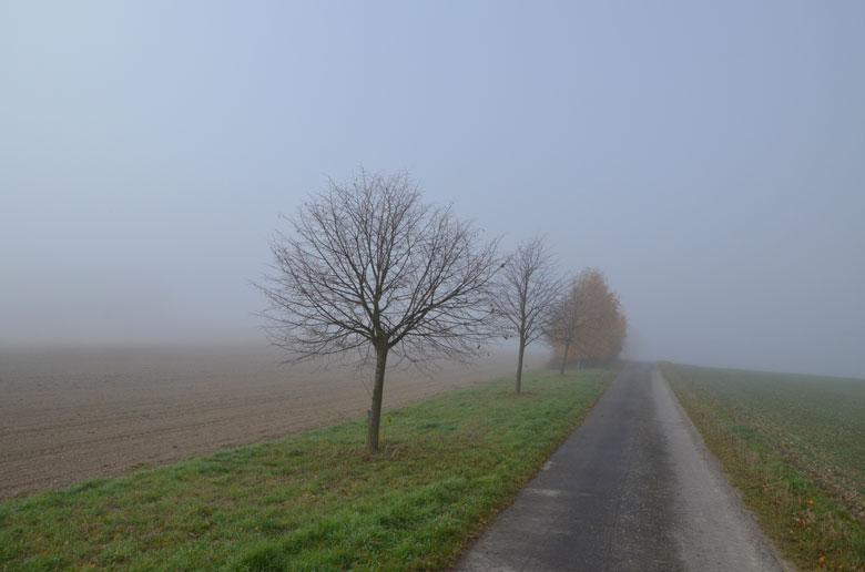 Weg und Bäume im Nebel