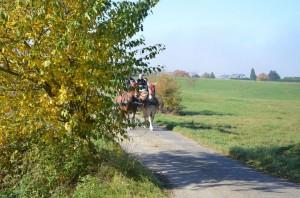Pferde bei Sonnenschein
