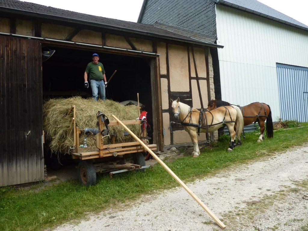 in der Scheune wird abgeladen, während die Pferde auf ihren Einsatz für die zweite Fuhre warten