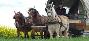 drei starke Pferde