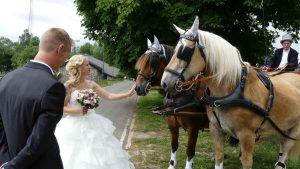 Braut und Bräutigam bei den Pferden