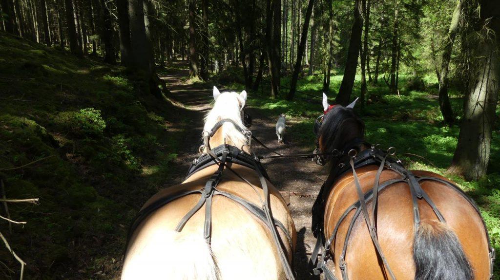1 Gespann und 1 Hund im Wald