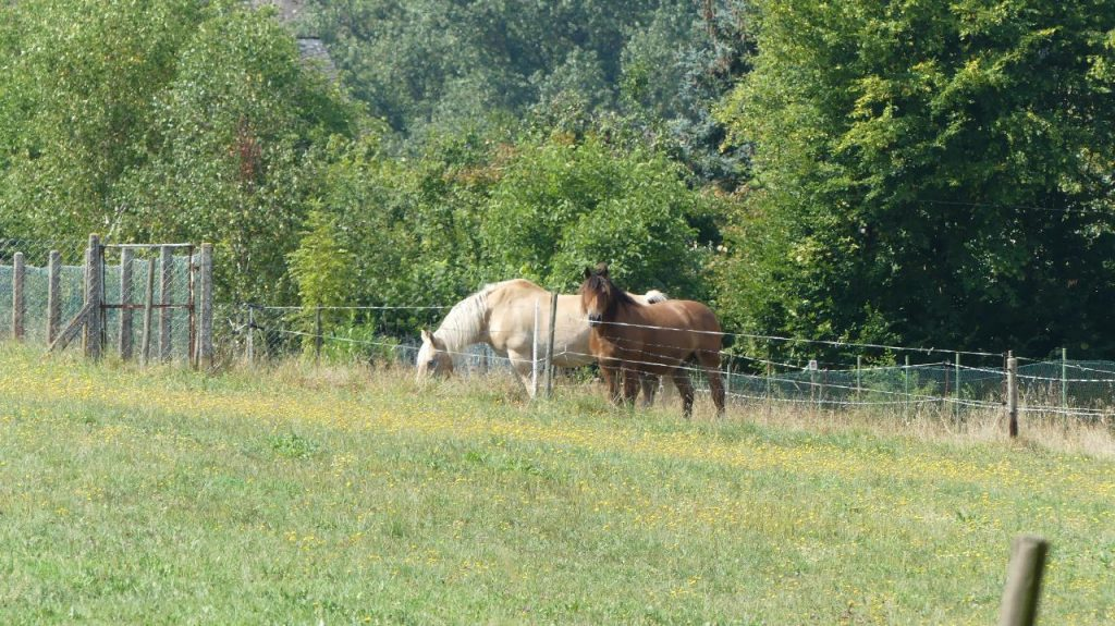 Weide für die Pferde