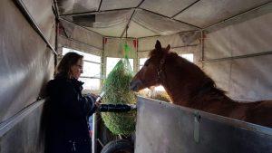 Mika im Pferde-Anhänger