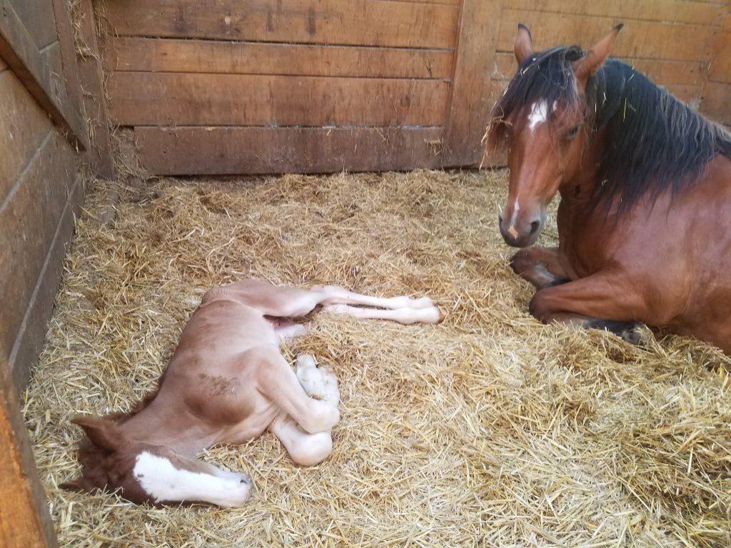 Ausruhen nach der Geburt